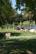 Ein Nashorn versteckt sich vor der Mittagssone