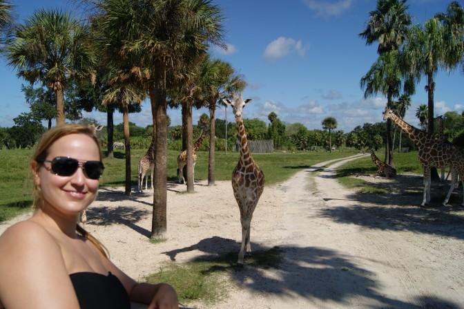Zum Glück sind die Giraffen nicht hinterher gelaufen...