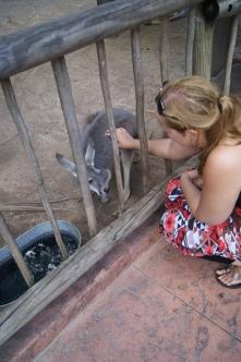 Dr Streichelzoo mit Kängurus