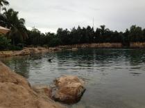 Einige Buchten in der Discovery Cove
